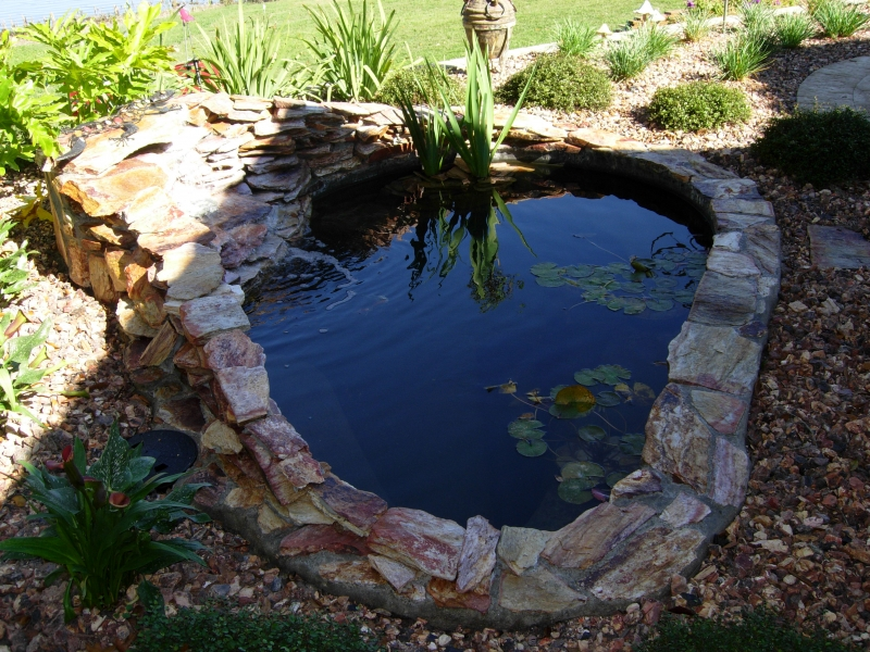 Freeform pool design orlando pool design windermere for Stone koi pond